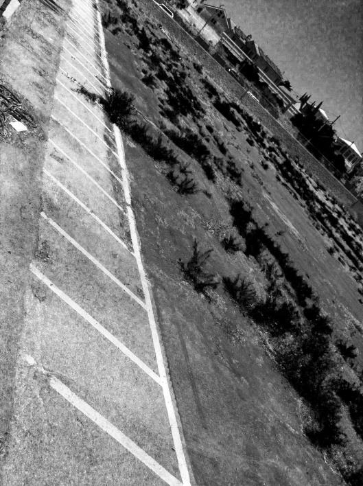BEF_ParkingWeeds